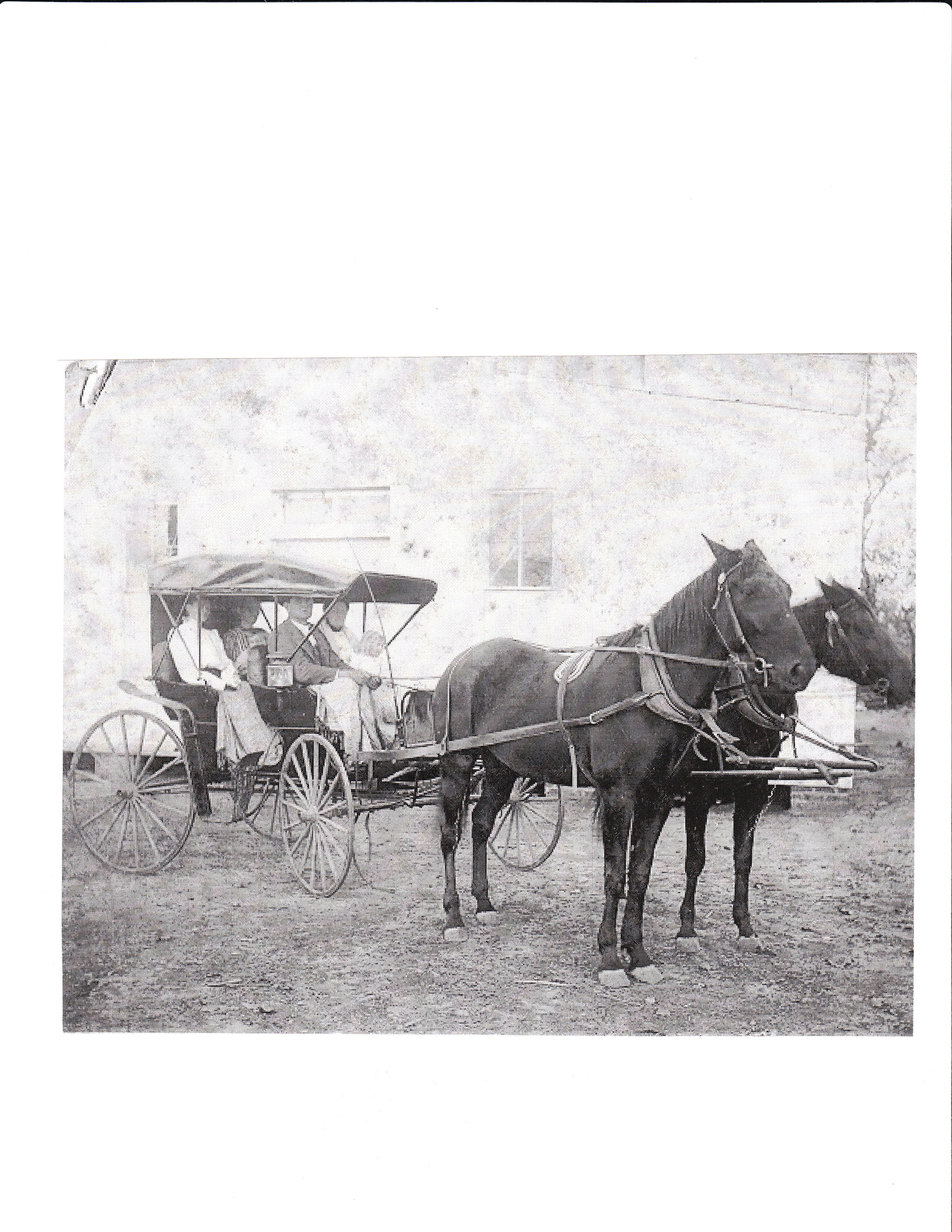 Horses & Buggy