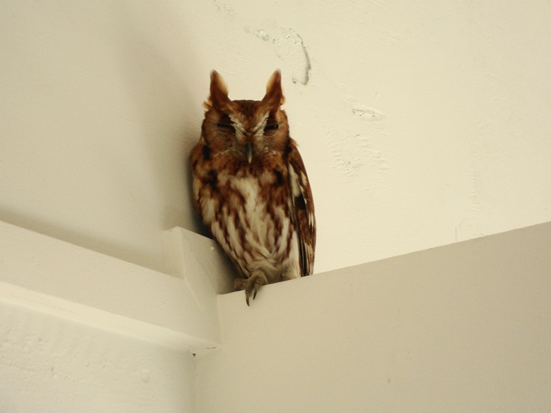 Owl at the Museum